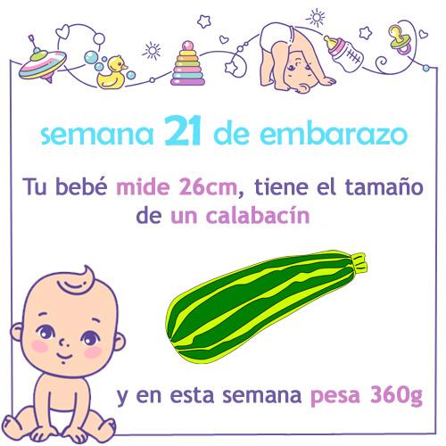 semana 21 de embarazo medida tamaño y peso