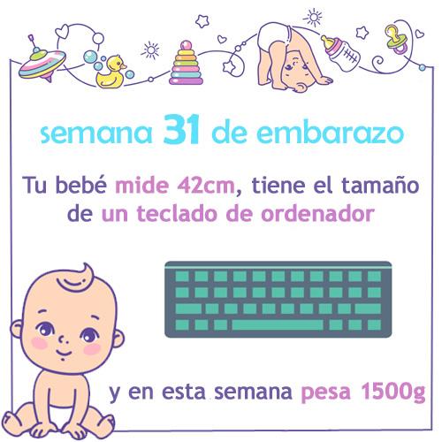 semana 31 de embarazo medida tamaño y peso
